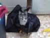 In a bag