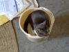 In a bucket