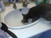 Drinking from the sink