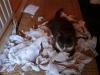 trashed-paper